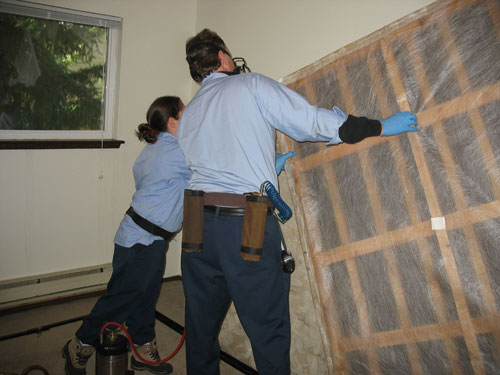 Bed Bug Inspection - Bed Bugs Etowah County, Alabama